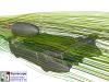 Streamlines F1 in Schools Design 1 Front View